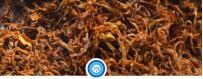 Líquidos para vapeo con sabor a tabaco | VapeAragón