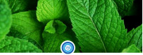 Aromas de menta para líquidos de vapeo | VapeAragón